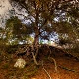 The-Forrest-Elder